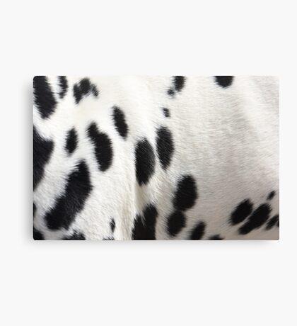 Dalmatian Dog Fur Canvas Print