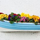 Little Garden in a boat. by John (Mike)  Dobson