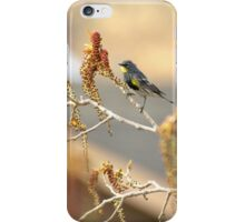 Yellow Rumped Warbler In Spring iPhone Case/Skin