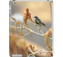 Yellow Rumped Warbler In Spring iPad Case/Skin