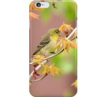 American Goldfinch In Springtime Maple iPhone Case/Skin