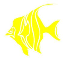 Yellow Angel Fish Photographic Print