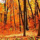 Autumns Fire by shutterbug2010