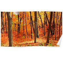 Autumns Fire Poster