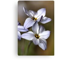 Star White with shades Canvas Print