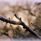 """"""" Frozen Winter Branches """" by Richard Couchman"""