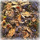 """ Winter Leaves Ensemble "" by Richard Couchman"