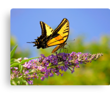 Two-tailed Swallowtail Butterfly Canvas Print