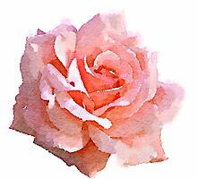 Light Pink Rose Watercolor by Big Kidult