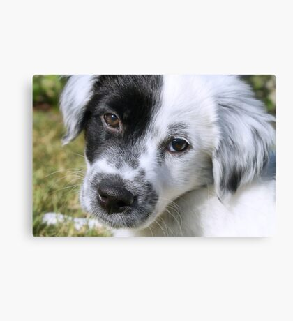 Black & White Puppy Portrait Canvas Print