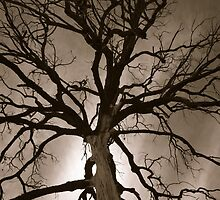 Spooky Tree by Glenn Russell