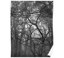 Scary Trees- Pimpala Track Poster