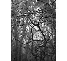 Scary Trees- Pimpala Track Photographic Print