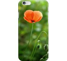 Red Poppy Flower in the Field iPhone Case/Skin