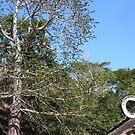 Stone ring by zumi