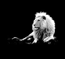 Lion by augustinet