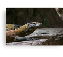 Komodo Dragons Canvas Print