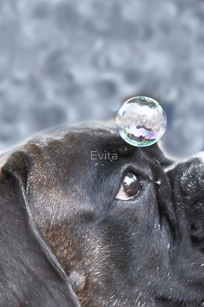 Bubble On My Head -Boxer Dogs Series-  by Evita