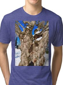Old Willow Tree, Stanley Ave. Park, Ottawa, ON Canada Tri-blend T-Shirt