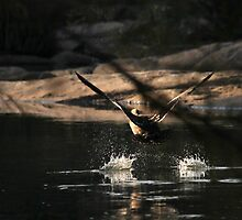Low flying by Graeme M