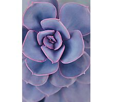 Purple Pearl Photographic Print