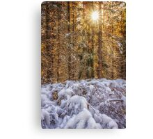 Burst of Winter Snow Photograph Canvas Print