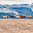 Montana Horses on the Rocky Mountain Front by Donna Ridgway