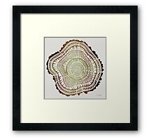 Tree Rings – Watercolor Framed Print