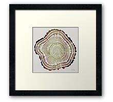 Tree Rings – Watercolor Framed Print