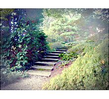 A Day At The Arboretum #2 - The Ascent Photographic Print
