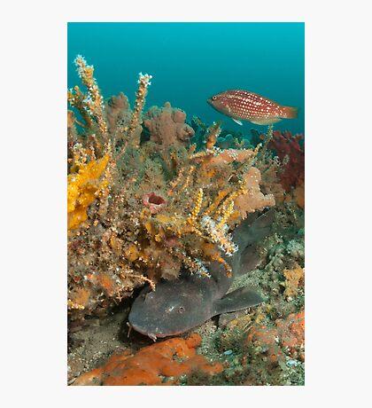 Blind Shark, Australia Photographic Print