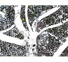 A Day At The Arboretum #3 - Treeish Framework #1 Photographic Print