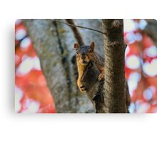 I like my red curtains but they keep falling down... Canvas Print