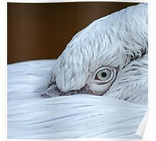 Closeup of the eye of a pelican Poster