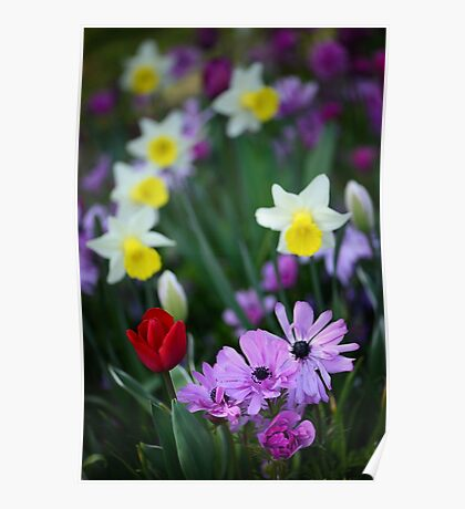 Colorful Flower Bed Photo Poster