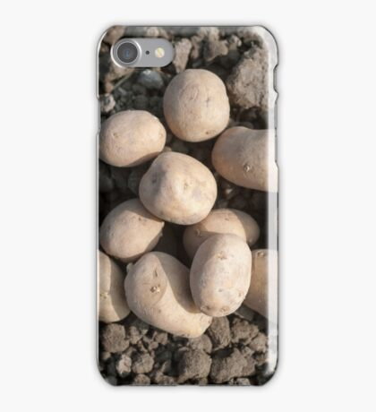 Frieslander potatos ready for planting in an allotment iPhone Case/Skin