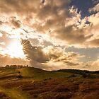 Bradgate Park Sunset by Mike Garner