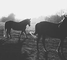 Two horses by Tomáš Hudolin