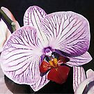 Purple Orchid by Matthew  Bates