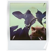 The cow 2 Poster