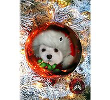 Snowdrop's Christmas Greeting Photographic Print