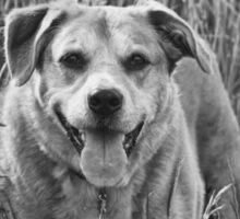 Happy Dog in Field Sticker