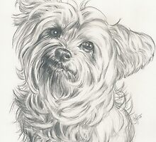 Little Darling YorkiePoo  by BarbBarcikKeith