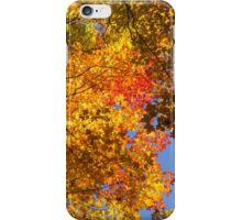 Vivid Yellows, Reds and Oranges - the Joy of Autumn Foliage iPhone Case/Skin
