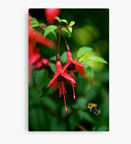 Wild Fuchsia at Loch Na Fooey (tall) Canvas Print