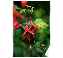 Wild Fuchsia at Loch Na Fooey (tall) Poster