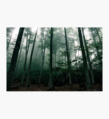 The mysterious house in the woods Photographic Print
