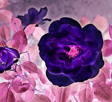 I Dream of Purple Roses... by Anita Pollak