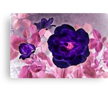 I Dream of Purple Roses... Canvas Print