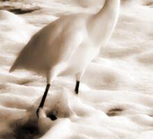 Snowy Egret in Sepia Sticker